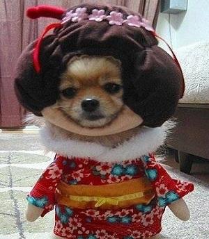 可愛すぎてキュンキュンしちゃう!犬のおもしろコスプレ画像集☆彡