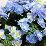 母の日にサプライズで贈りたい!珍しいお花特集
